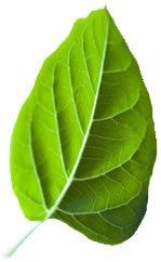 dec_leaf